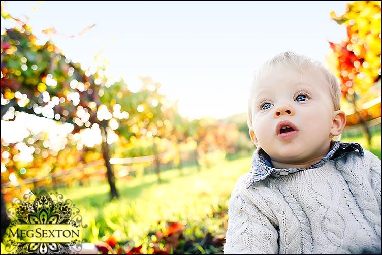 baby photographer north bay