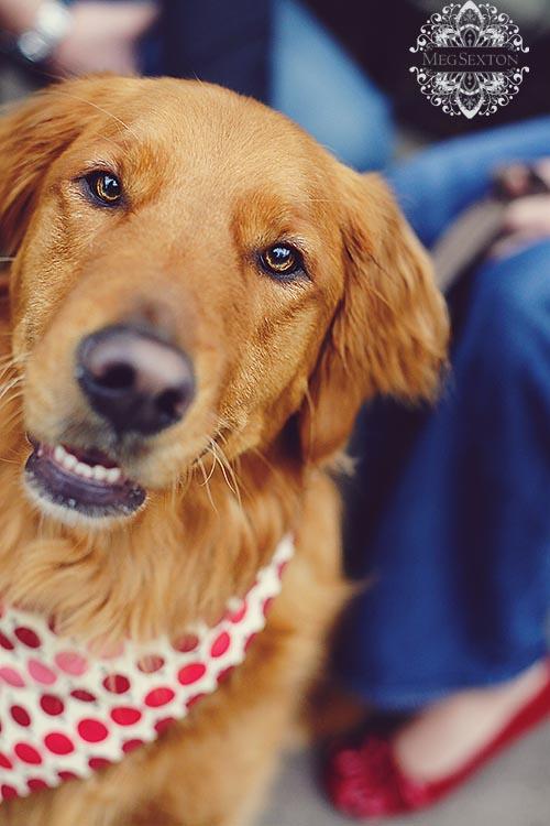 Danville dog photos