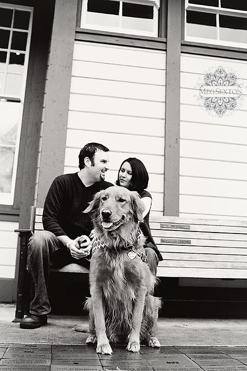pet photos in the east bay